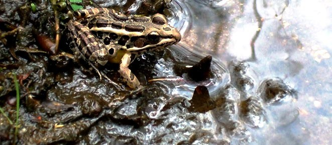 Midshore Landfill Wetland Mitigation
